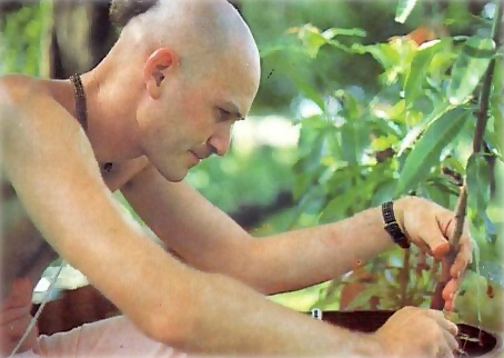 Coordinator Narahari dasa has made grafts from eight of the world's choicest varieties of mango trees.
