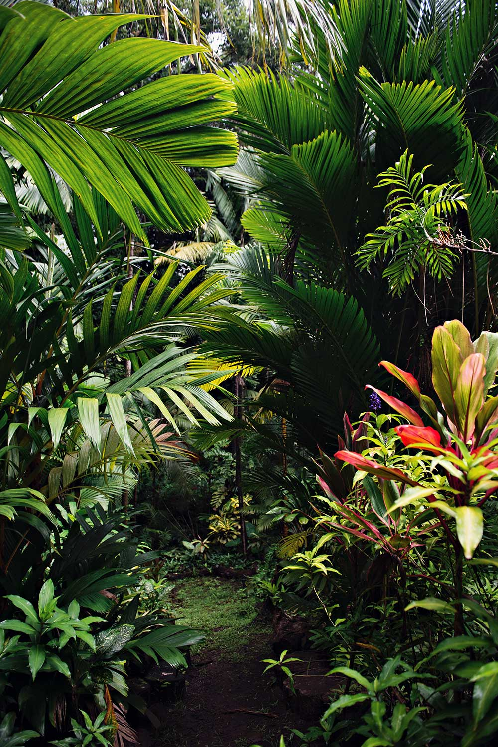 Various types of green plants: palms, ti leaves, etc.