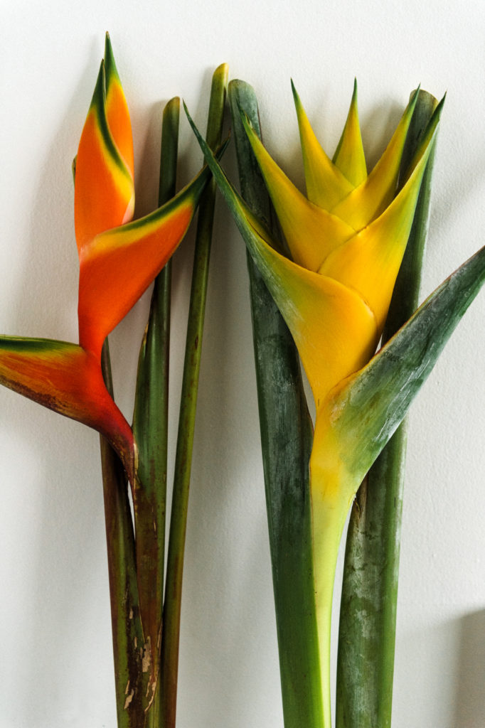 Tropical flowers inspire Hadley Nunes.