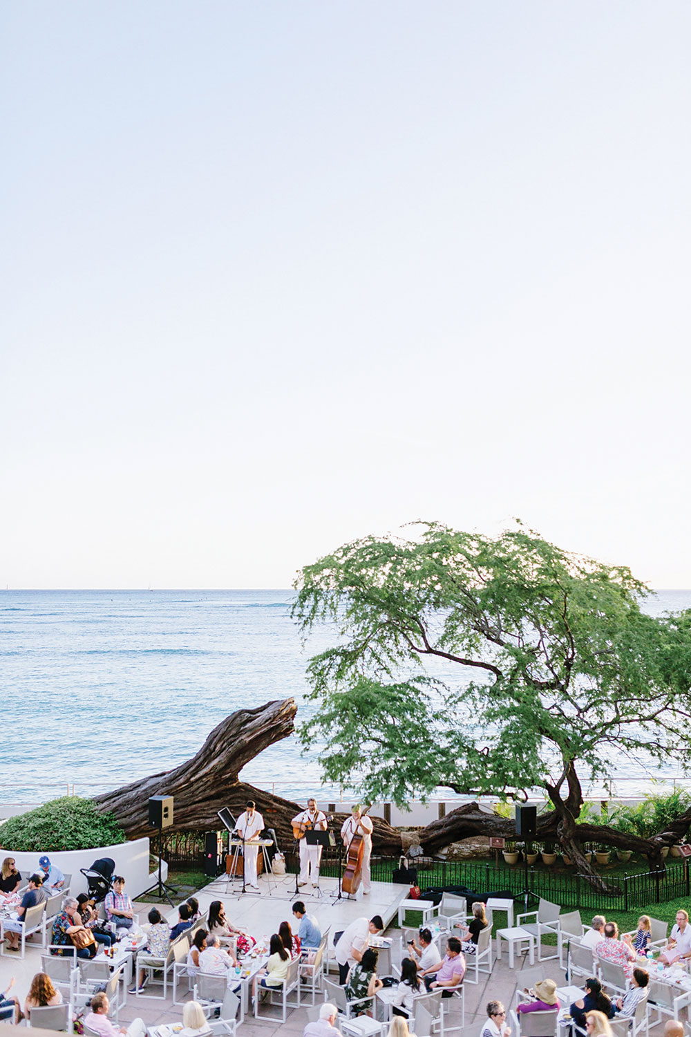 Trio band dress in white play for a crowd in front of a tree and ocean.