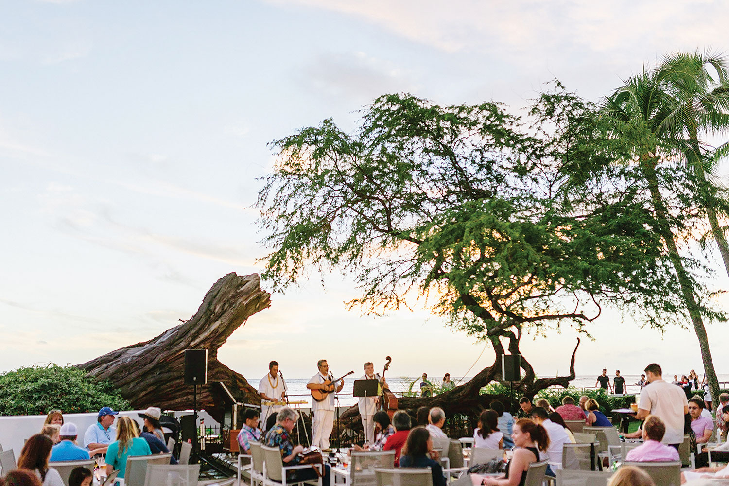 4 members of a band dressed in white stand in front of a tree and ocean playing for an audience