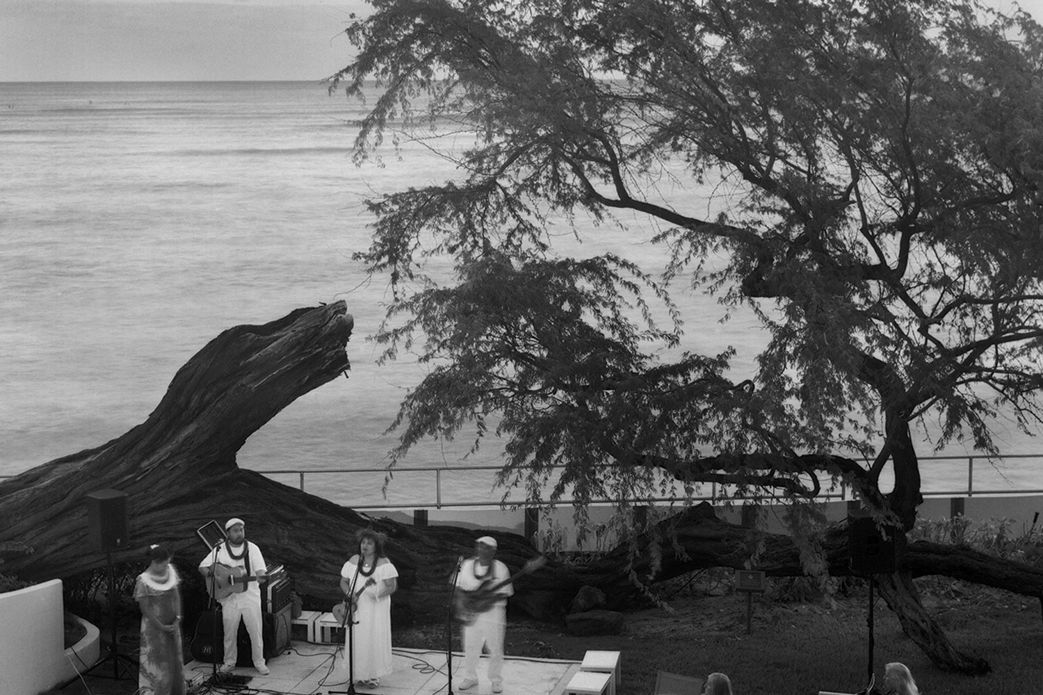 Black and white image of kiawe tree and a band dressed in white on stage