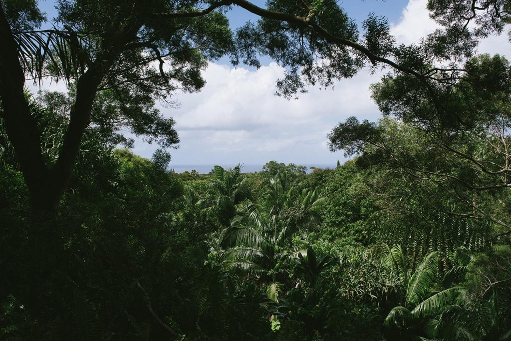 A landscape image of a tropical forest with a blue sky and white clouds.