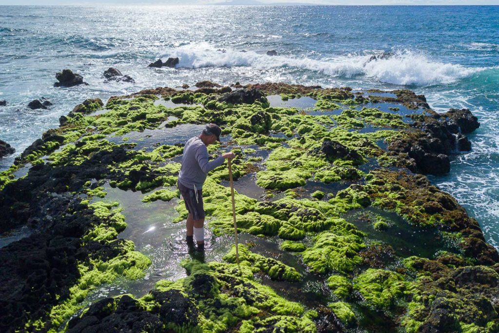 Man standing on a sea moss covered point by the ocean