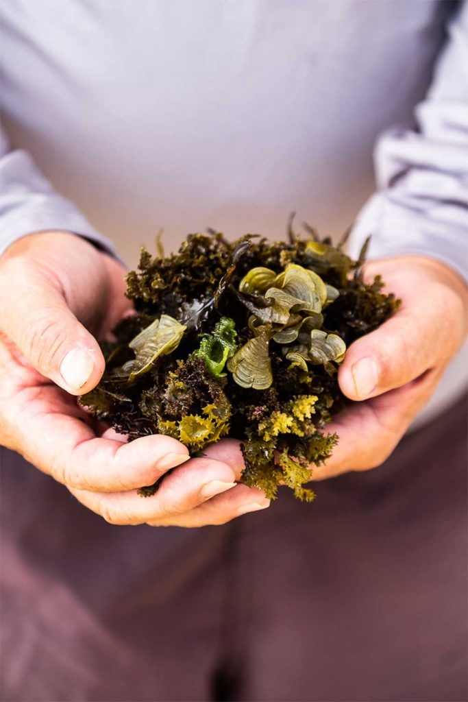 Two hands holding a bundle of moss