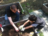 Teacher Tobin and student planting some Ace Peppers