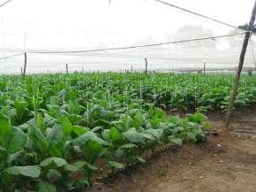 Fields n Farm (27)