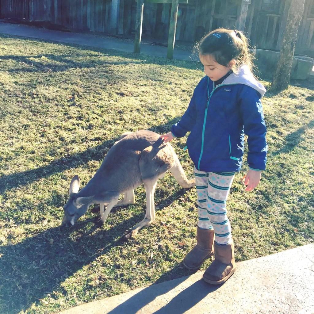 Petting at Kangaroo at Nashville Zoo