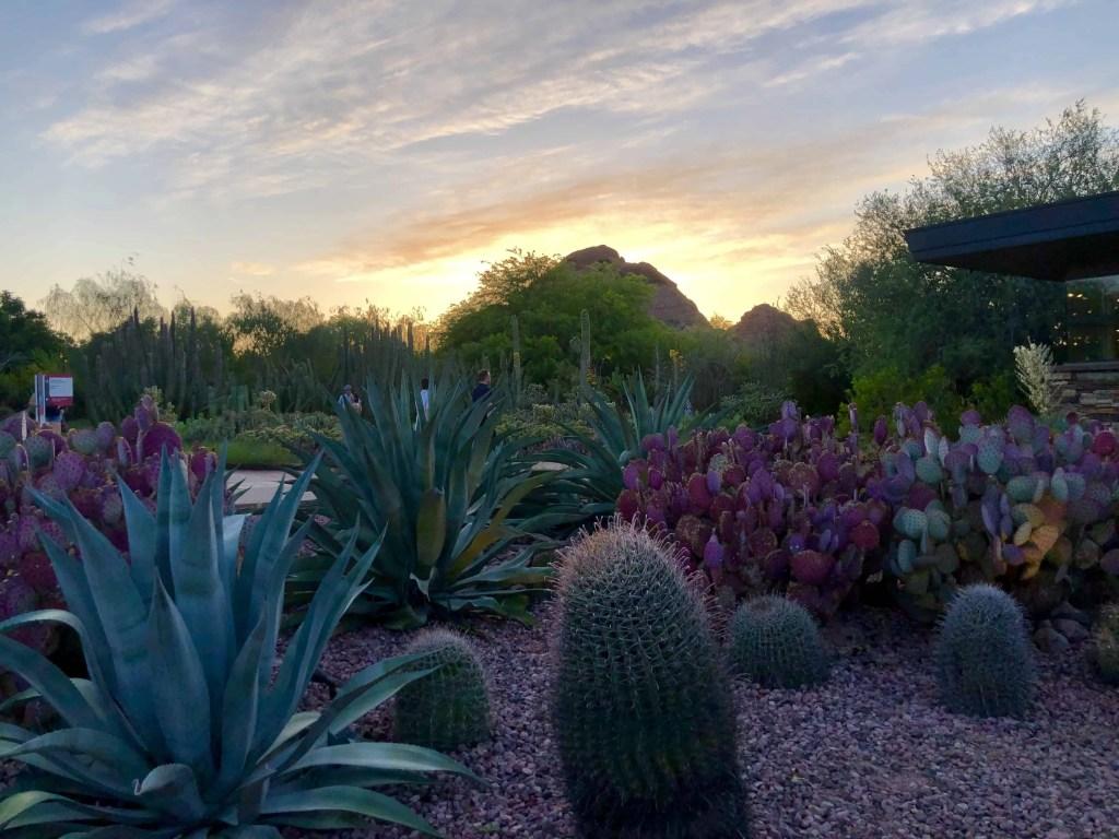 Sunset at a cactus garden