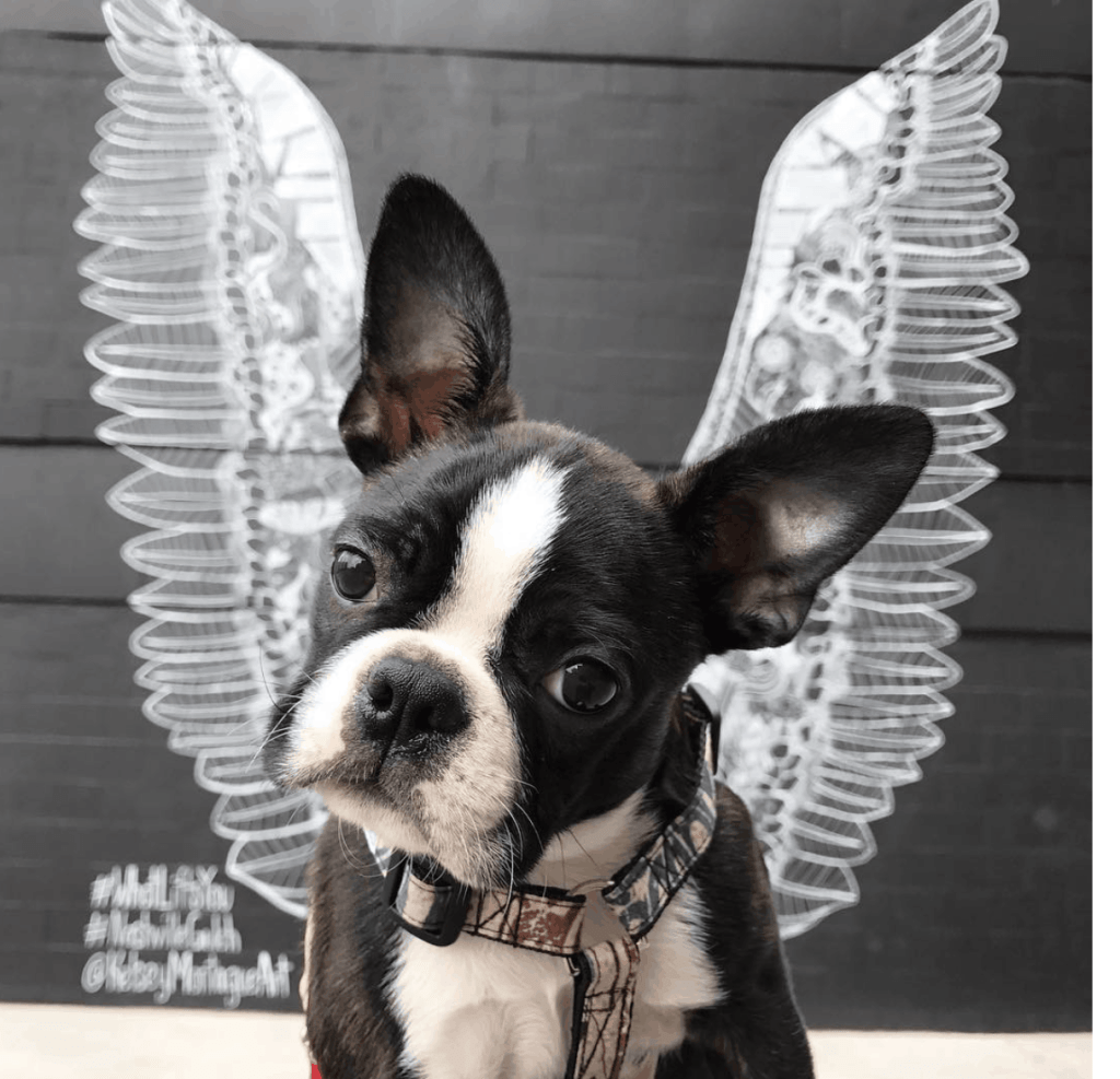 Dog with wings
