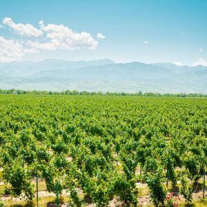 Kazachstan wijn rode wijn kleine flessen borat