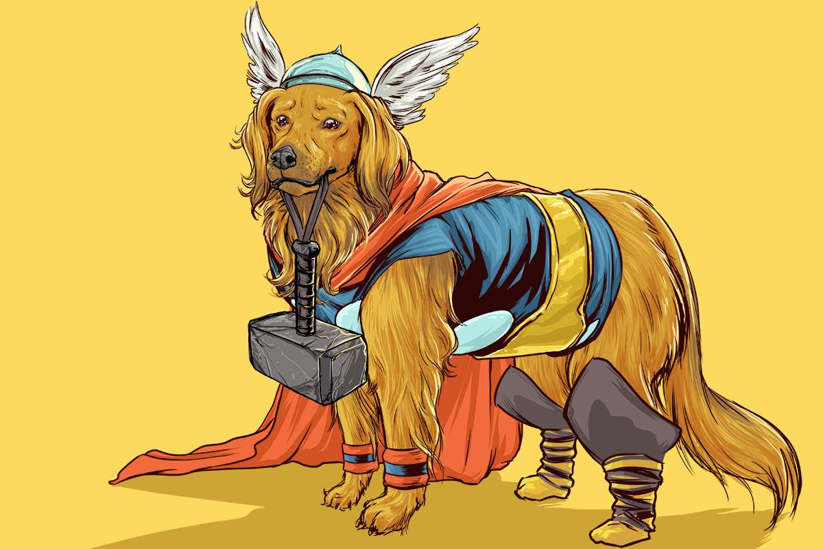 thor dog