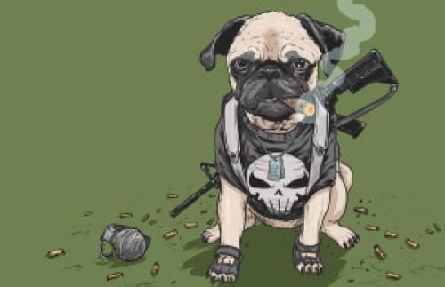 punish pug