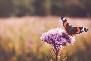 summer photo by Josephine Amalie Paysen (@josephineamaliepaysen) on Unsplash