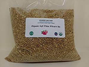 Organic wheat berries for growing wheat grass. It's such a beautiful, cheap, and easy table decor option. I use the organic wheat so I can cut the wheat grass and throw it into a smoothie. Alice in Wonderland tea party sources | Halfpint Design