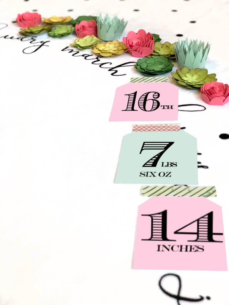 Baby Milestone Blanket Photo Backdrop, Flowers And Succulents For Newborn  Photography. Birth Announcement.
