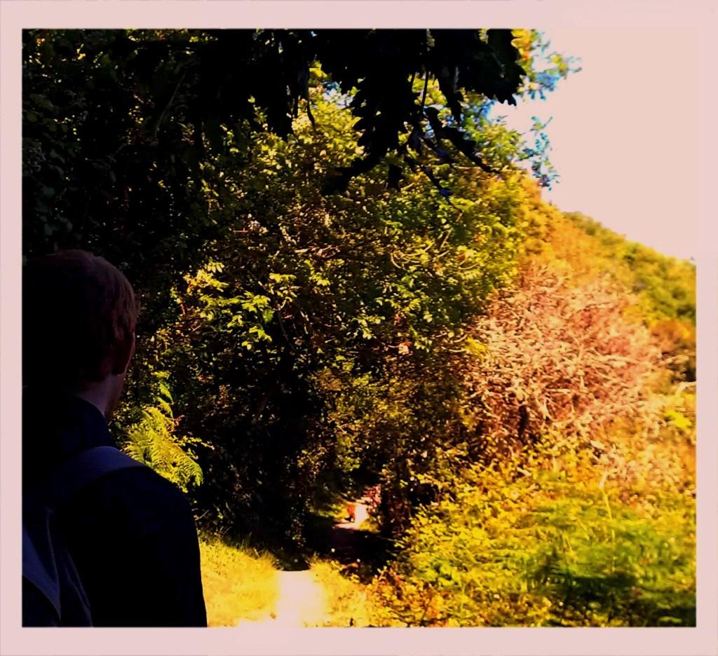Fox on Cornwall South West Coastal Path