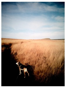 photo of dog on marsden moors