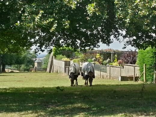Horses along the Ridgeway