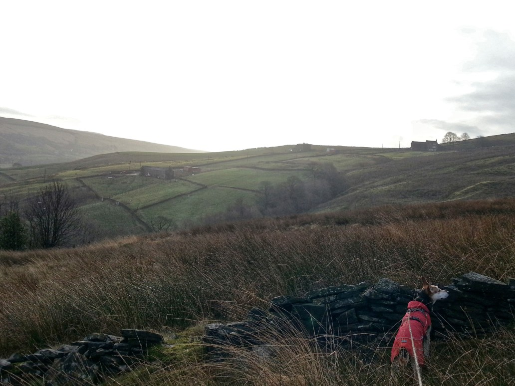 Hike path Pule Hill from Intake Head Poetry Trail Marsden
