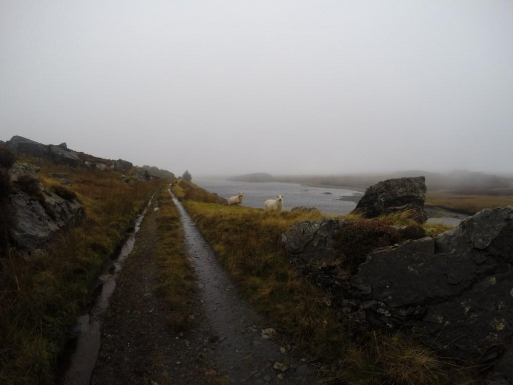 Reservoir Above Cwm Penmacno