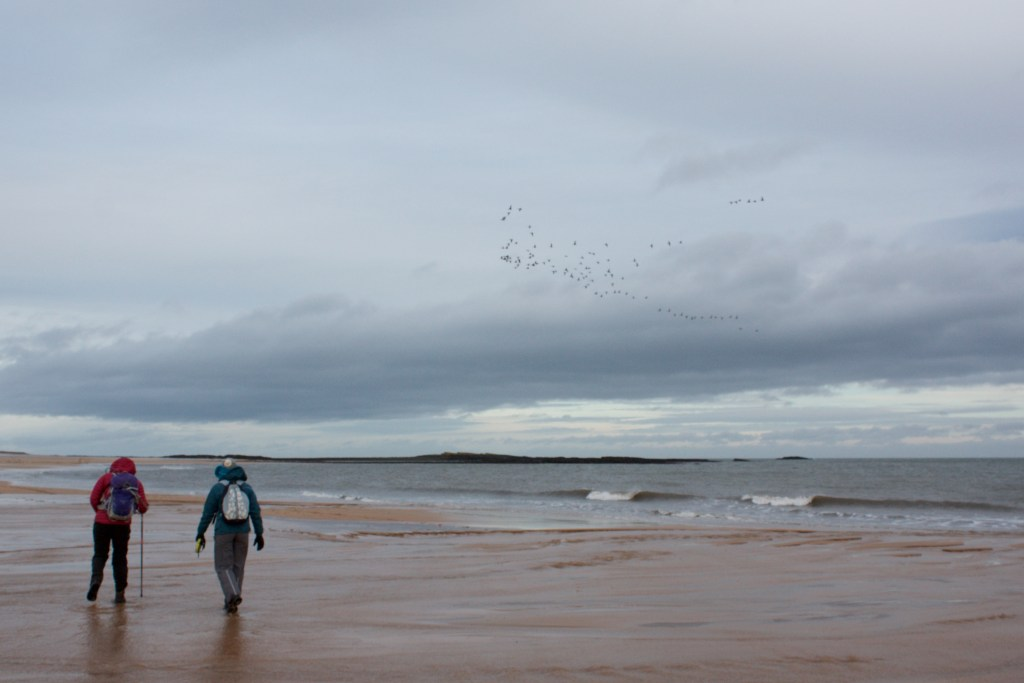 northumberland coastal path beach hikers with geese above