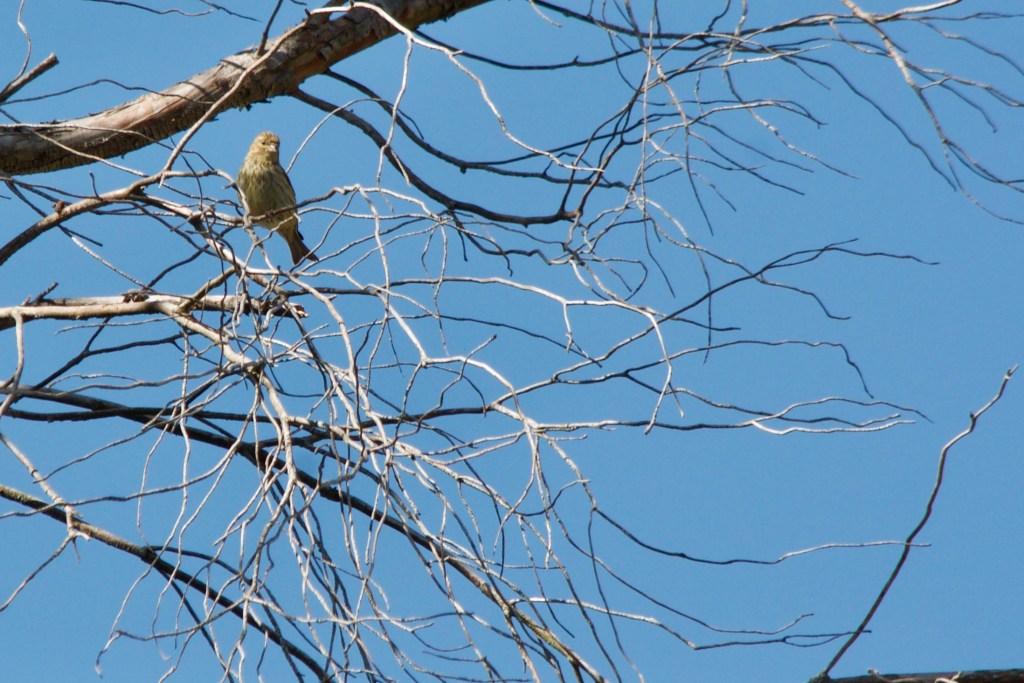 Wild bird mallorca on GR221 hike route