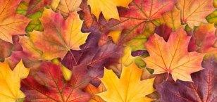 Leaves-for-art-session.jpg