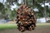 bird-feeder-photo.jpg