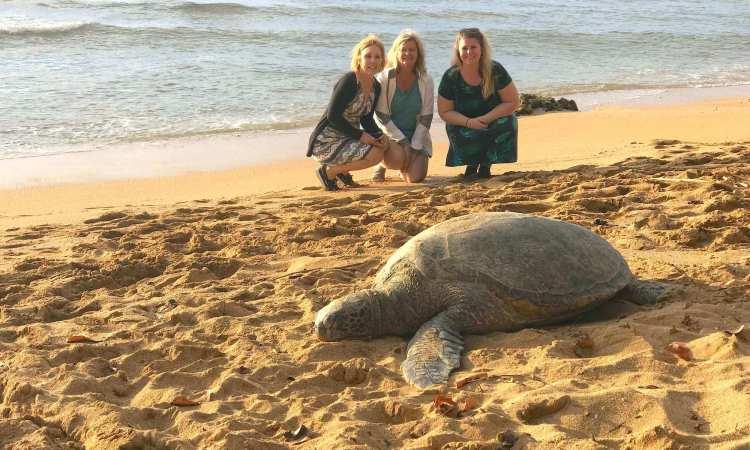 North Shore Turtles