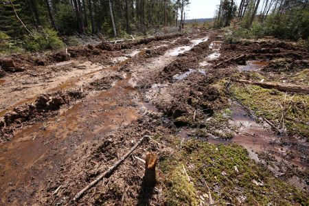 "Big Marsh, Nova Scotia.  Matt Miller of the Ecology Action Centre calls this clearcut ""a new low in forestry harvesting in Nova Scotia.""  Photo Raymond Plourde"