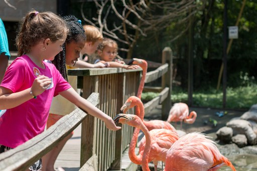 children standing at a wooden fence feeding flamingos by hand