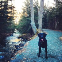 FMorris Lake and Russell Lake in Dartmouth, NS are dog-friendly