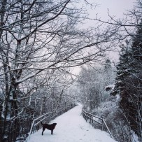 Dog at York Redoubt Trail