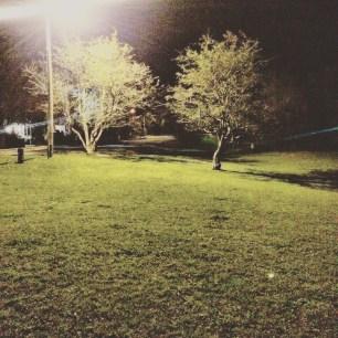 Halifax Peninsula HRM Off-Leash Sports Fields