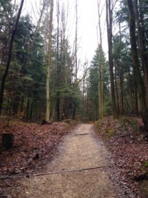 Bad Reichenhall - Wald
