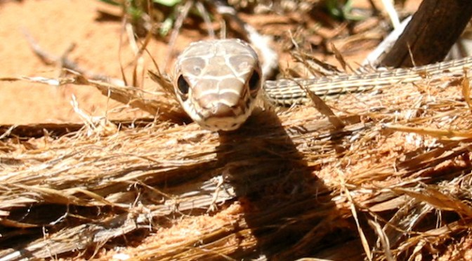 Numbers 25:10-29:40: A 'snake' again becomes an icon of