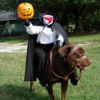 Epic Pet Costume: The Headless Horseman