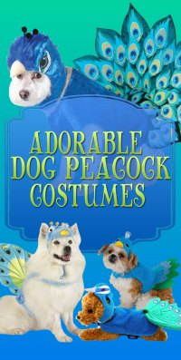 Dog Peacock Costume | Absolutely Adorable Pet Costume