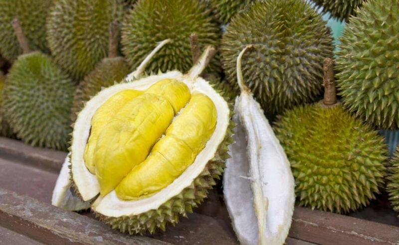 Jual Bibit Durian Montong