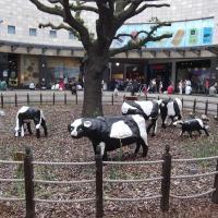 Concrete cows
