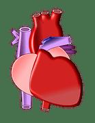 heart-497674__180