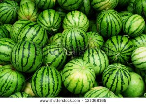 stock-photo-many-big-sweet-green-watermelons-and-one-cut-watermelon-126068165