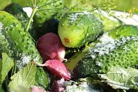 cucumbers-889661__180