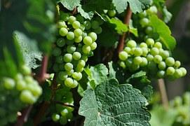 wine-418011__180