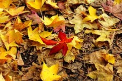 autumn-1035713__180