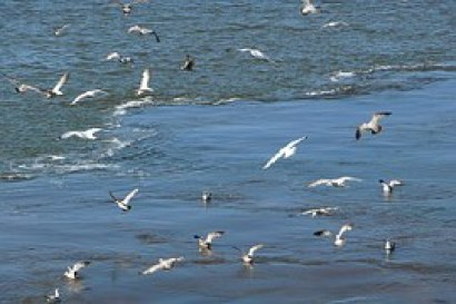 seagull-54988__180