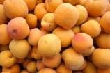 apricots-943133__180