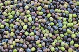 olives-1307154__180
