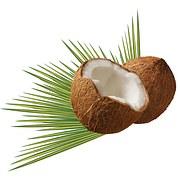 coconut-979858__180